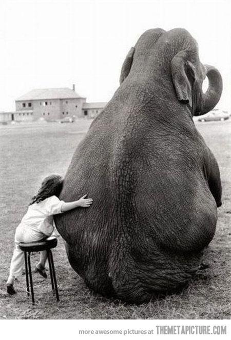 funny-girl-hugging-elephant-cute
